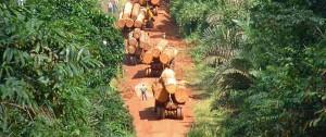 deforest